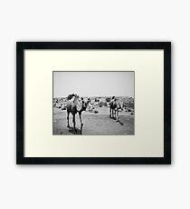 Camels Framed Print