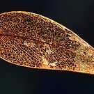 """ Gum Leaf Abstract "" by helmutk"