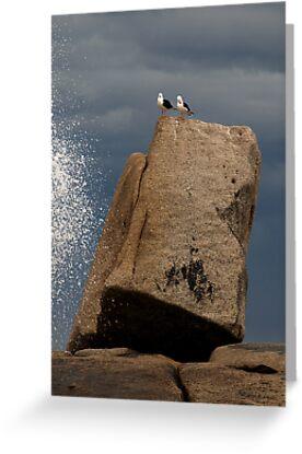 Gulls at Bicheno - Tasmania by Bev Pascoe