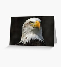Bald Eagle Gazing Greeting Card