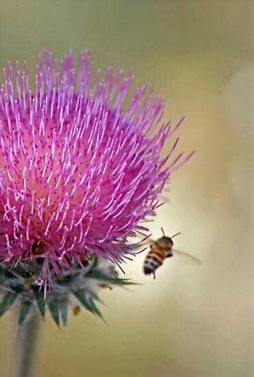 Buzzing Along --A Bee's Journey by Corri Gryting Gutzman