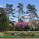 Geese in a Spring Garden by Paula Betz