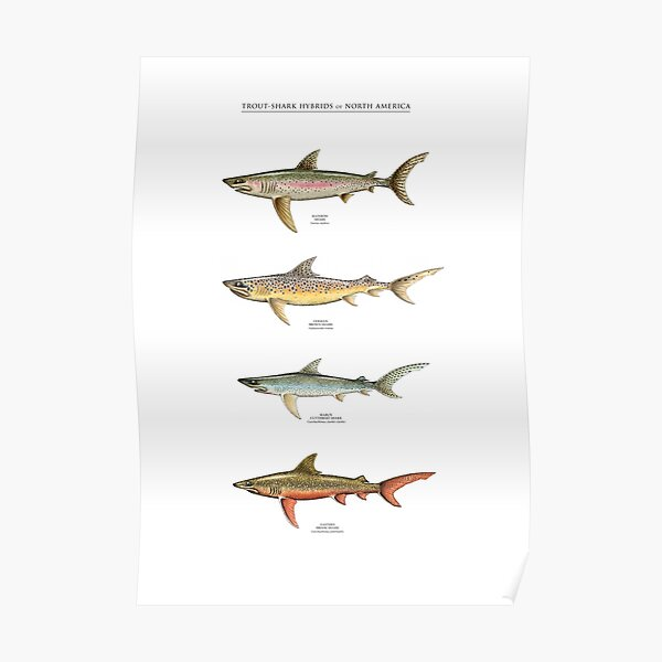 TROUT-SHARK HYBRIDS of NORTH AMERICA Poster