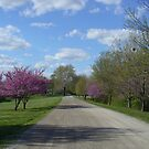 Country Road in the Spring by Paula Betz