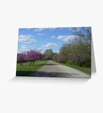 Country Road in the Spring Greeting Card