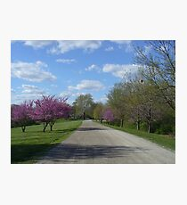 Country Road in the Spring Photographic Print