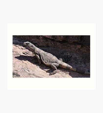 """This is really my Best Side"" - Las Vegas Chuckwalla Lizard Art Print"