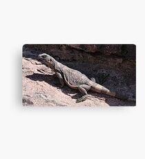 """This is really my Best Side"" - Las Vegas Chuckwalla Lizard Canvas Print"