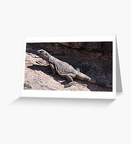 """This is really my Best Side"" - Las Vegas Chuckwalla Lizard Greeting Card"