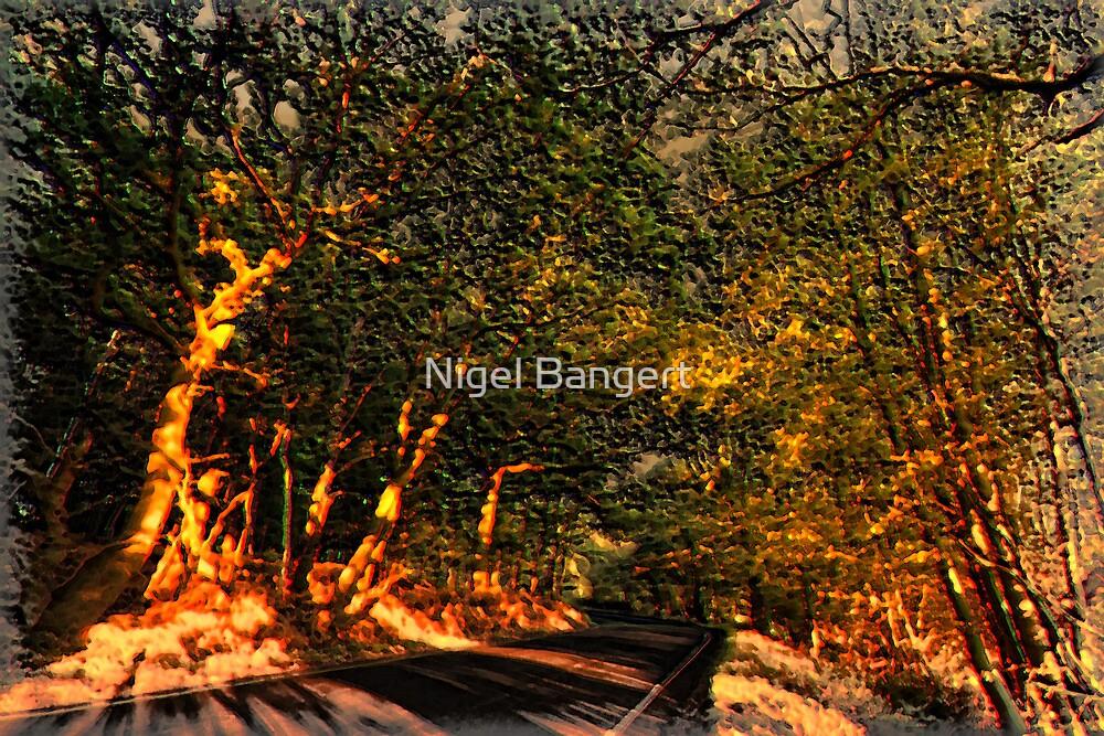 Autumn Sunlight by Nigel Bangert