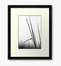 Dragon Fly- BW  Framed Print