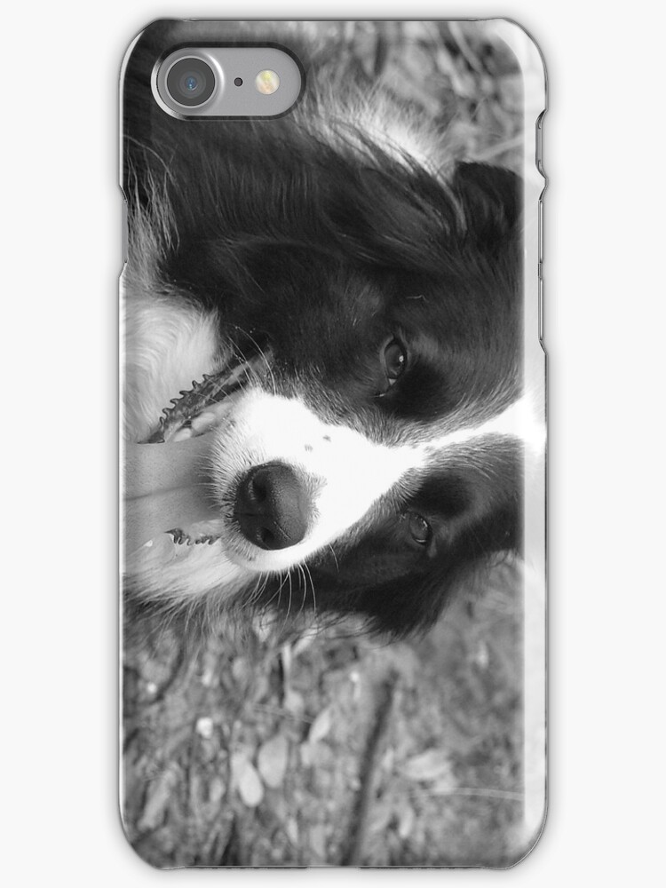 Border Collie by Madmick19