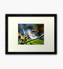 Apple Blossom & Honey Bee Framed Print