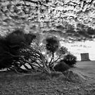 Windblown at La Perouse by Bruce Campbell