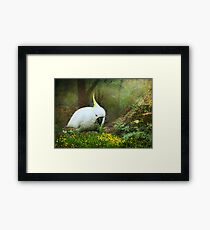 Forage the Forrest Floor Framed Print