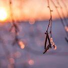 Icy Sparkle by Vaidotas Mišeikis