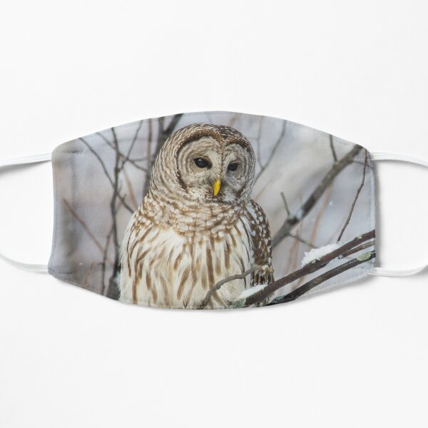 Barred Owl on  Snowy Branch Mask