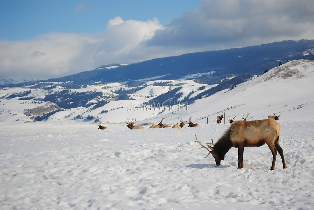 Deer Stags in the snow by JuliaWright