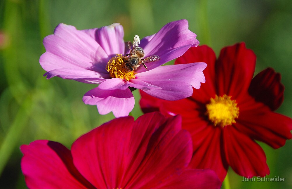 To bee or not.... by John Schneider