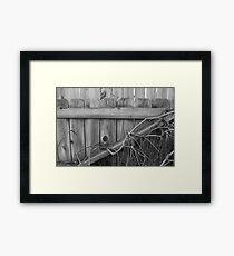 Overgrown Fence Framed Print