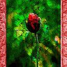 Poppy Bud by Gal Lo Leggio