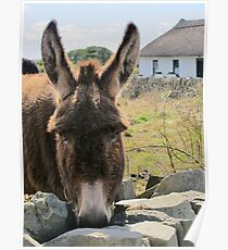 Donkey saying Hello! Poster