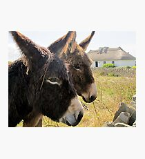 Donkies saying hello! Photographic Print
