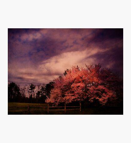 Miraculous Change Photographic Print