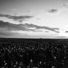 Sunset over the fields (Black and White by ThePingedHobbit