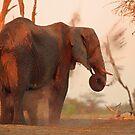 Bath for both by Explorations Africa Dan MacKenzie