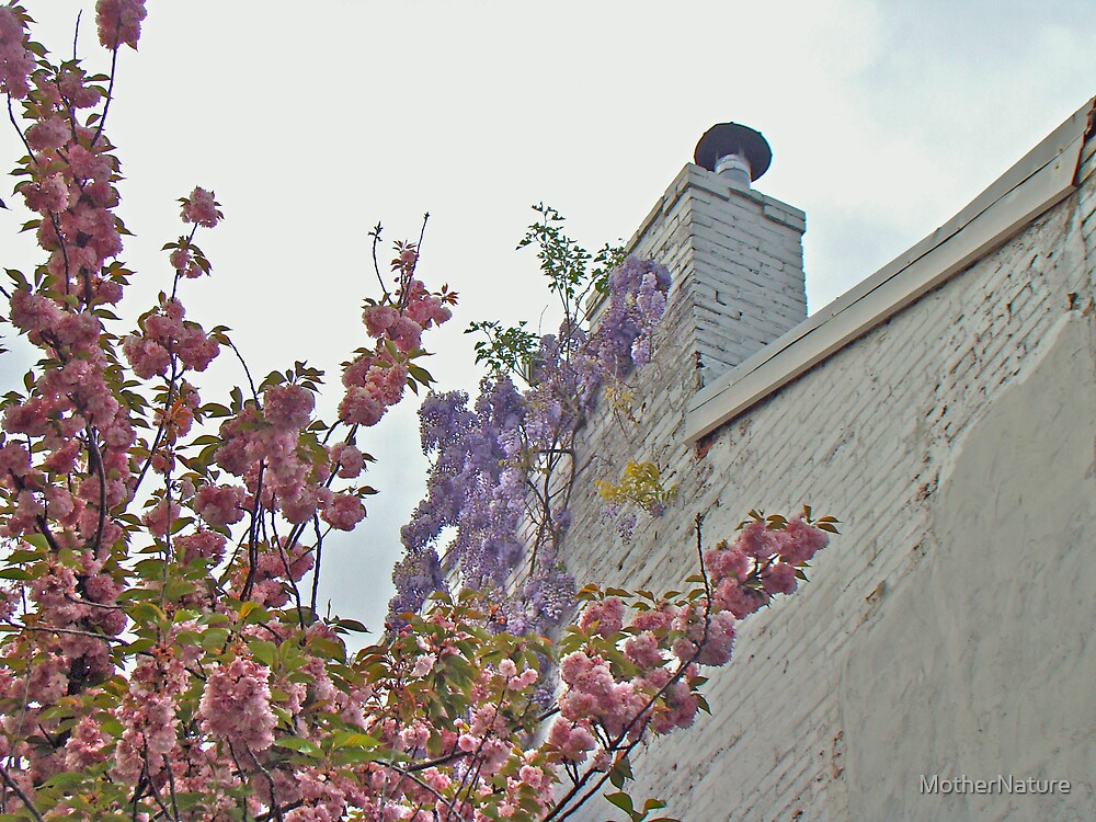 Cherry Blossoms and Wisteria Against a White Chimney by MotherNature