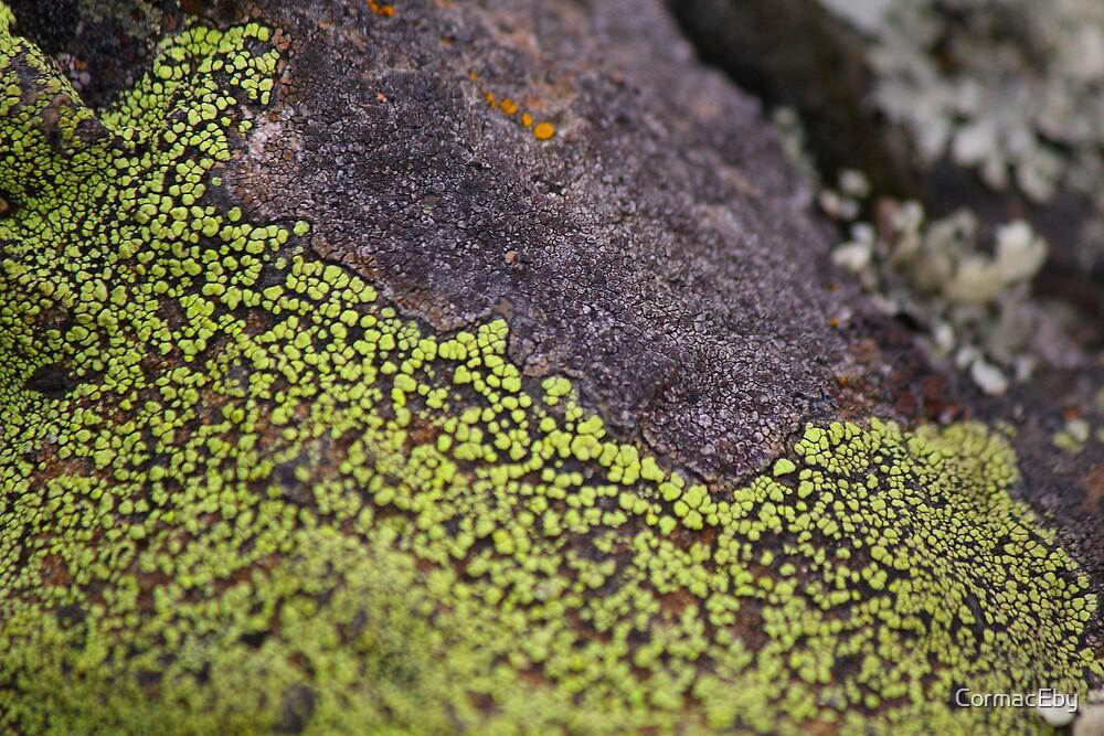 Green Lichen by CormacEby