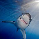White Shark by Carlos Villoch