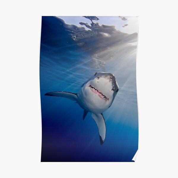 White Shark Poster