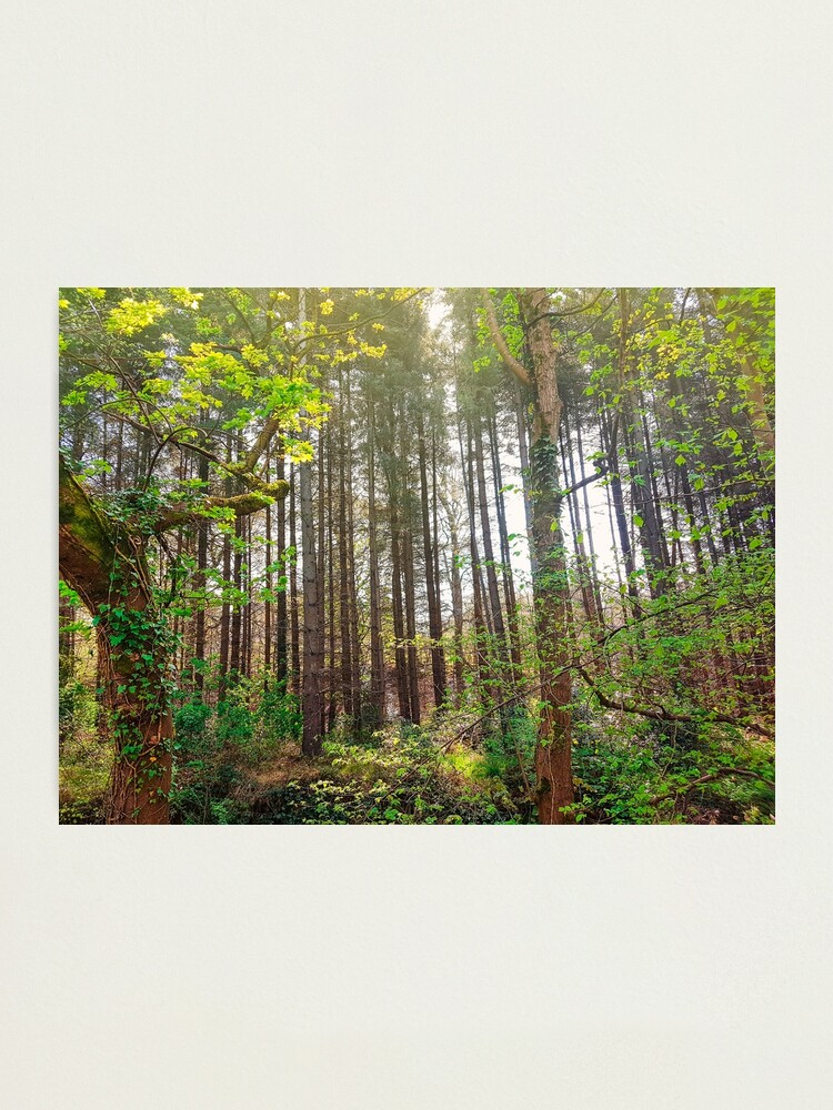 Alternate view of Woods Nature Photographic Print
