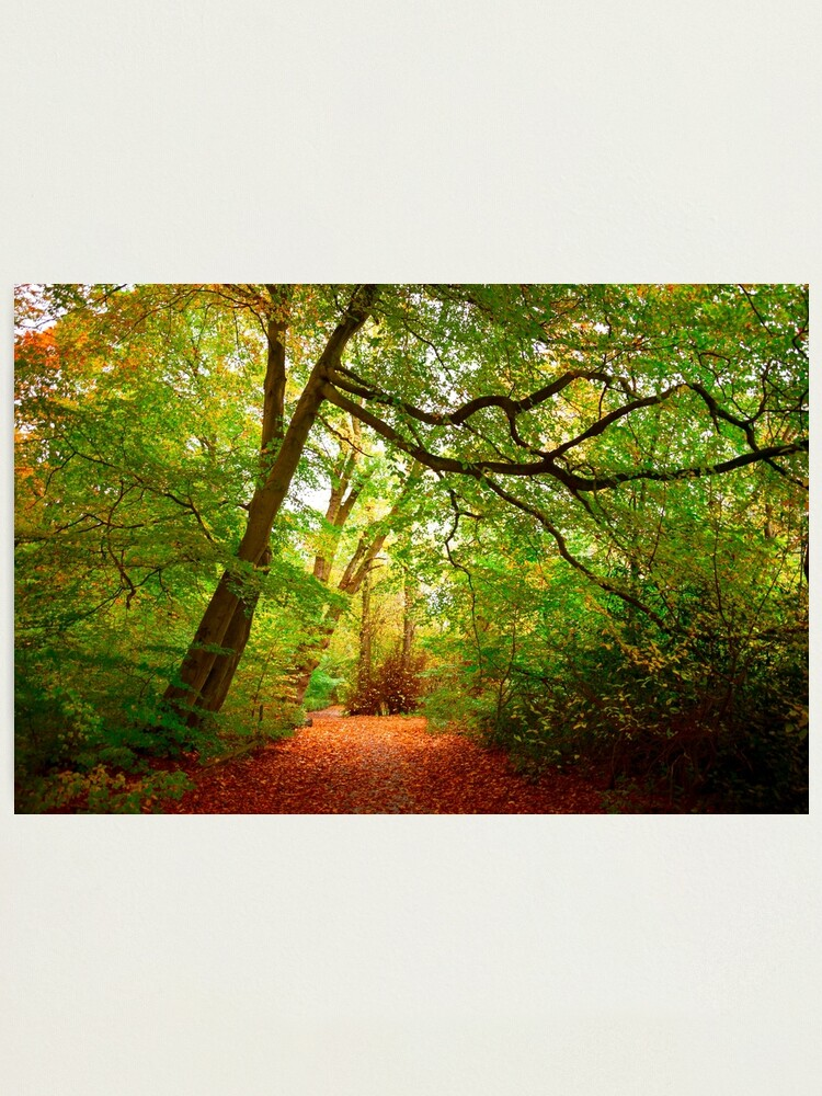 Alternate view of Path in the forest Photographic Print