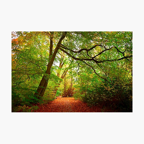 Path in the forest Photographic Print