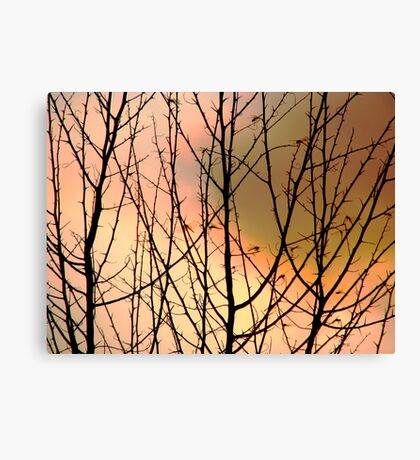 August Night Canvas Print
