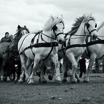 Heavy Horses by jemmo357