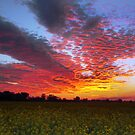 SUNSET CANOLA by Helen Akerstrom Photography