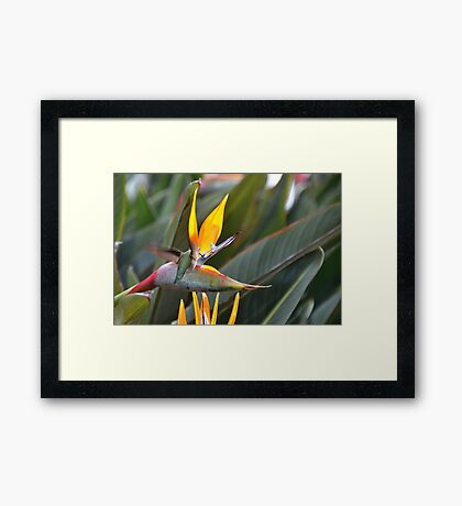 Feeding Framed Print
