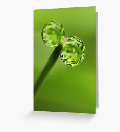 Grass Green Dew Drops Greeting Card