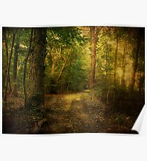 Sunset in the Woods Poster