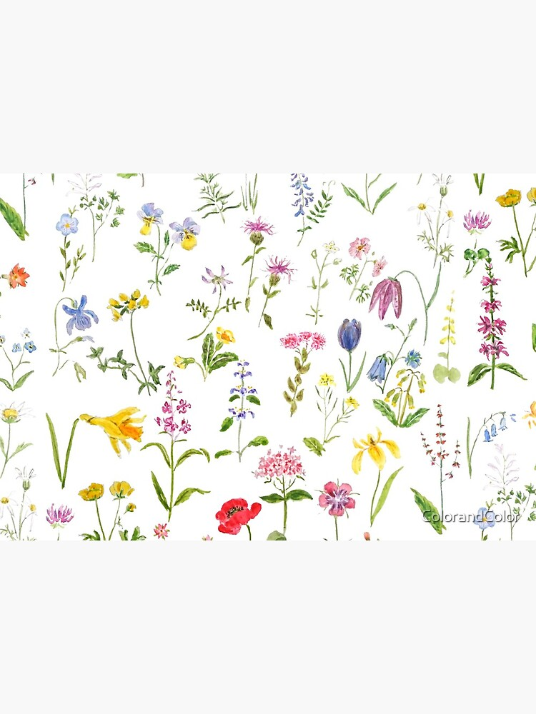 botanical colorful countryside wildflowers watercolor painting by ColorandColor
