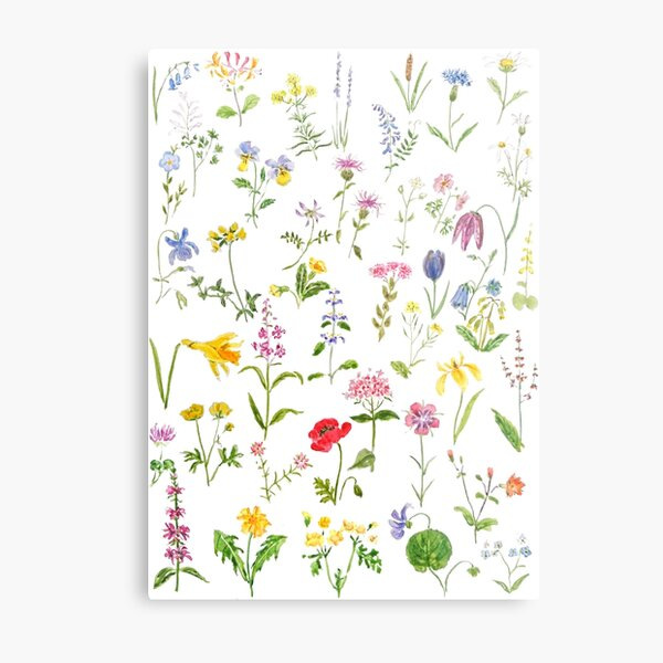 botanical colorful countryside wildflowers watercolor painting Metal Print