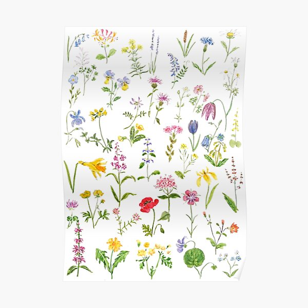 botanical colorful countryside wildflowers watercolor painting Poster