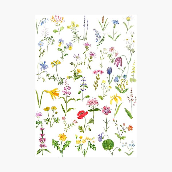 botanical colorful countryside wildflowers watercolor painting Photographic Print