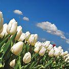 Spring on Flakkee 2 by Adri  Padmos