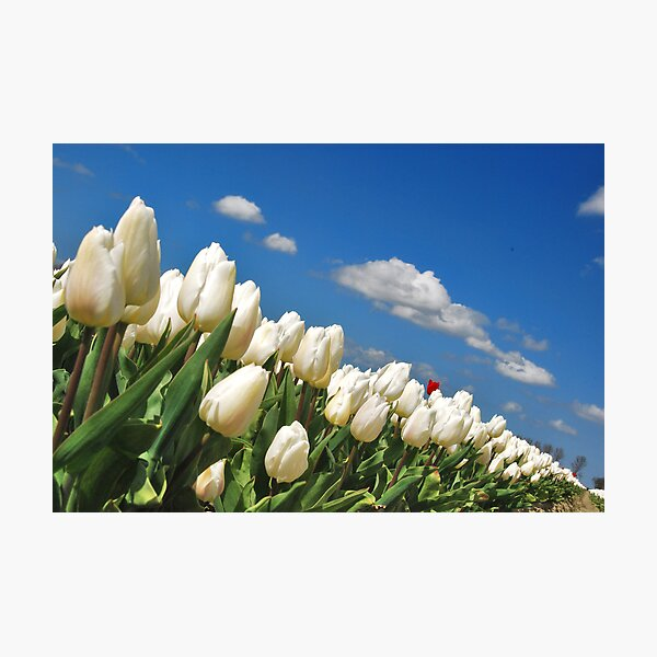 Spring on Flakkee 2 Photographic Print