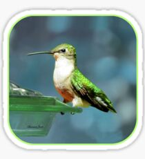 Tiny Backyard Visitor ~ Hummingbird Sticker